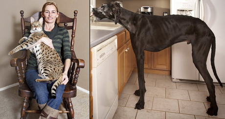 guinness names worlds tallest cat and dog