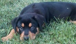 Couple allegedly sold neighbor's missing puppy on Craigslist