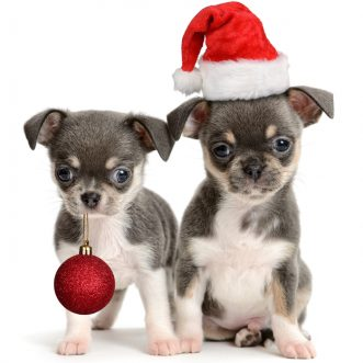 DogTime's 2012 Holiday Gift Guide
