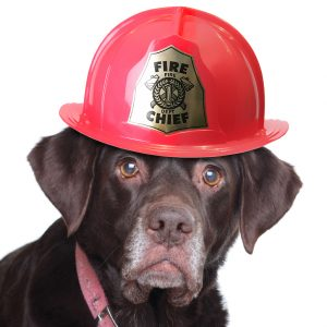 Dogs rescue families from house fires
