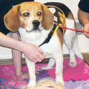 Junkyard Beagle rescued after 3 years