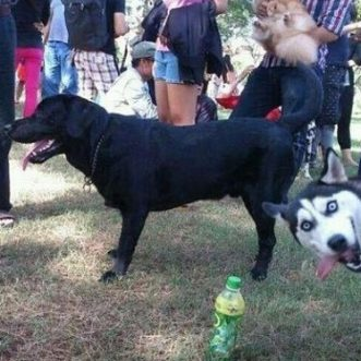 The best dog photo ever
