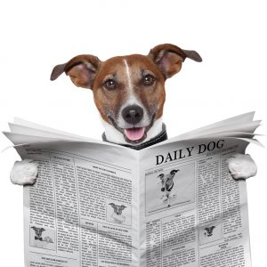 DogTime's top 10 dog news stories in 2012
