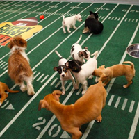 Puppy Bowl a real touchdown for animal shelters