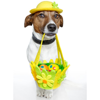 25 Easter dog pictures - Dogtime