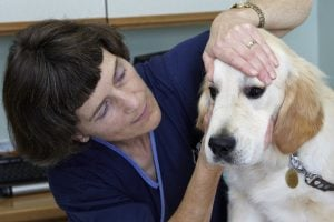 Organization Provides Free Eye Exams To Service Animals Every May