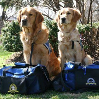 Comfort dogs deployed to Boston after horrific bombings