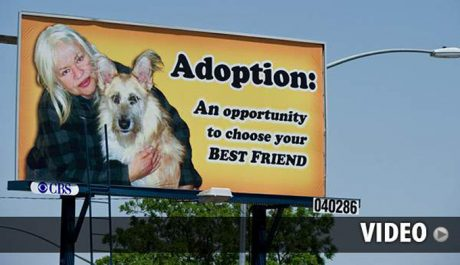 Woman Rents Billboard To Promote Adoption Of Adult Dogs