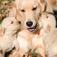 25 Cute Pictures Of Puppies And Mama Dogs For Mother's Day