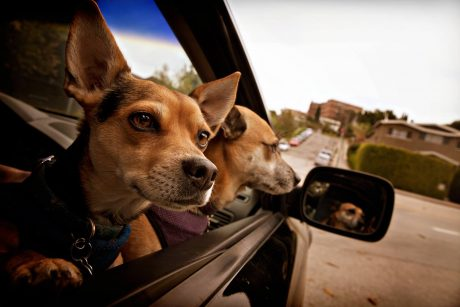 13 Pics Of Dogs On The Go