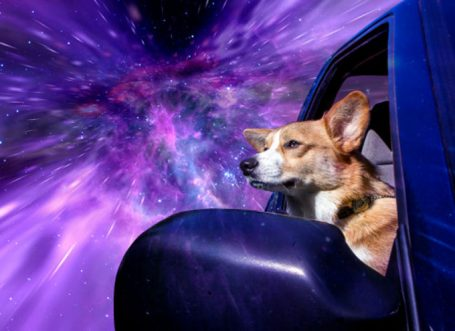 Photographer Makes Dogs Look Like They Are Traveling Through Space