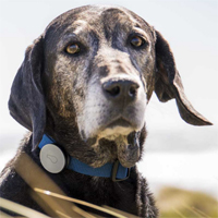 """""""Whistle"""" aims to help your pet stay fit"""