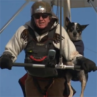 Adventurous service dog hang-glides with owner