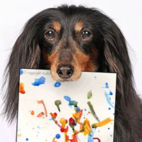 Blind Dachshund turns artist to help dogs in need
