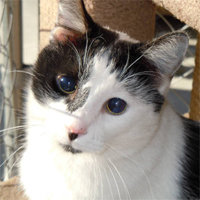 Meet the 2013 Petties Grant $10K winner: Blind Cat Rescue & Sanctuary