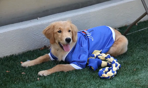 University of Tulsa adds puppy to sports roster - Dogtime