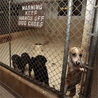 Detroit home to upwards of 50,000 abandoned dogs