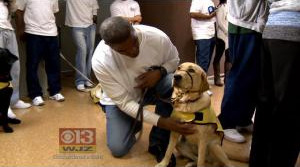 First Therapy Dogs Graduate From Maryland Prison Training Program