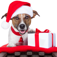 DogTime's 2013 Holiday Gift Guide