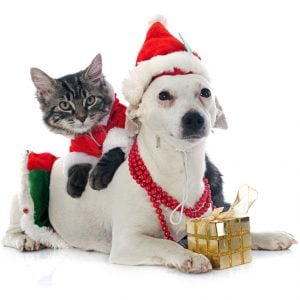 Top ways to spend the holiday season with pets