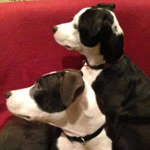 Seeing-eye pup and blind brother are flourishing at new home