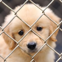 Ohio anti-puppy mill law to go into effect January 1