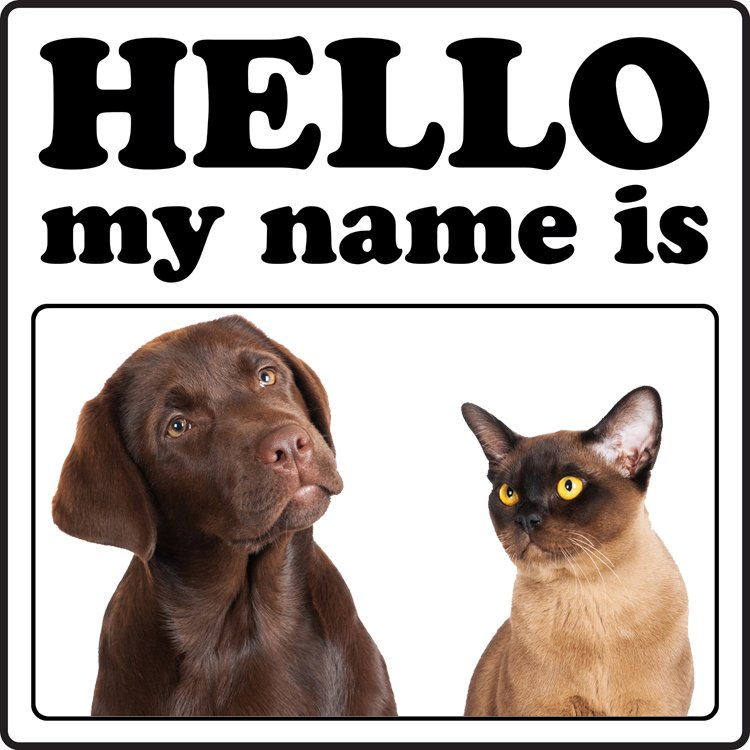 Top 10 Most Popular Dog And Cat Names Of 2013 Dogtime