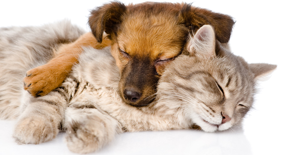 A report on the importance of flea control for dogs and cats in america