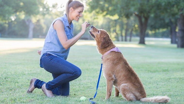Beautiful mid adult Caucasian woman gives her dog a treat as she trains him. They are in a dog park.