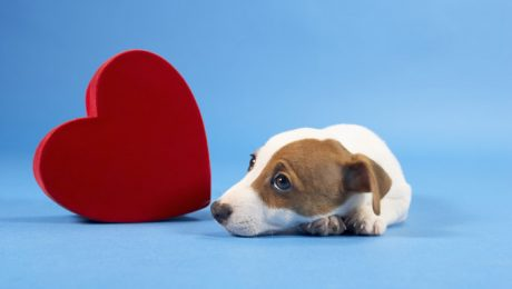 Tips To Keep Your Dog Safe This Valentine's Day