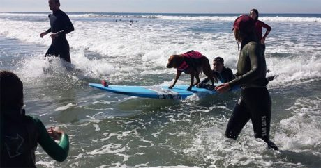 Surfing dog grants ultimate wish to terminally ill boy