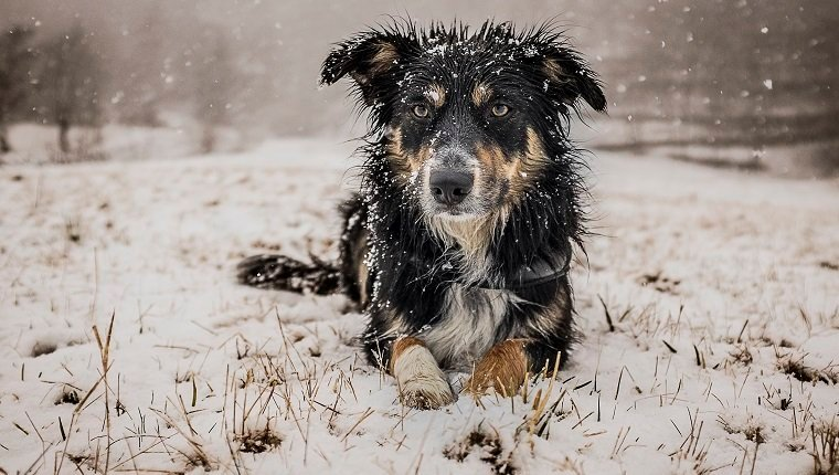 Hypothermia In Dogs: Symptoms, Causes, & Treatments - Dogtime