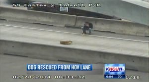 Man rescues injured dog from Houston freeway