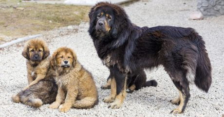 At almost $2 million, is this the most expensive dog ever?