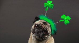 St. Patrick's Day Safety For Your Pup
