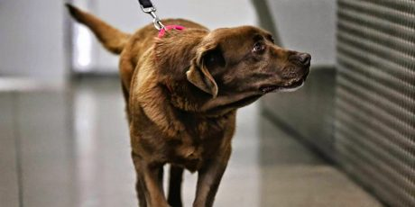 Veteran and bomb dog share happy reunion at Chicago airport