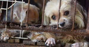 "HSUS releases list of 101 ""problem"" puppy mills in the U.S."