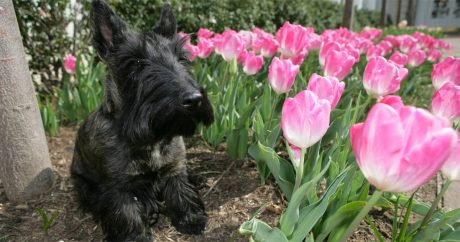 Miss Beazley, former Second Dog of the U.S., has died