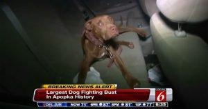 17 dogs rescued, 26 people arrested in Florida dogfighting bust