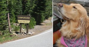 Lost dog lured from Tahoe wilderness after two long years