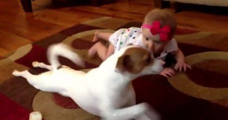 Dog shows baby how to crawl