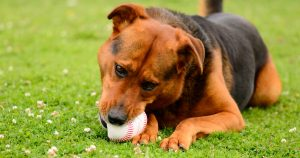Which dog is most like your favorite baseball team?