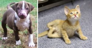 Ten amazing before-and-after pet-recovery pictures