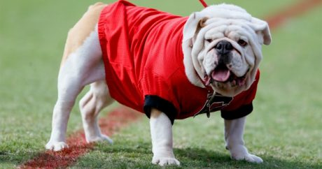 Most popular college dog mascots