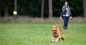 What makes a great dog park?