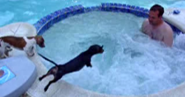 Dachshund Loves The Hot Tub Dogtime