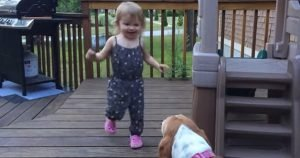Basset Hound and toddler dance