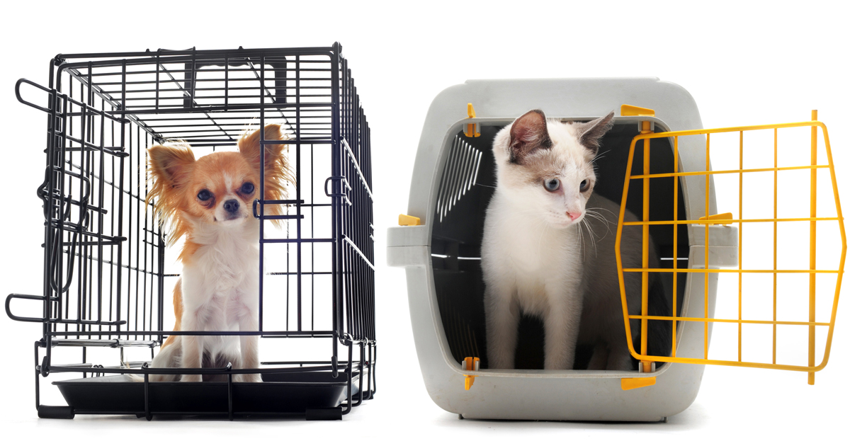 How to find a pet-friendly rental property - Dogtime