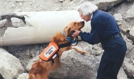 9 11 Search And Rescue And Shelter Dogs As Heroes Dogtime