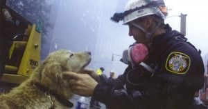 9/11, search and rescue, and shelter dogs as heroes